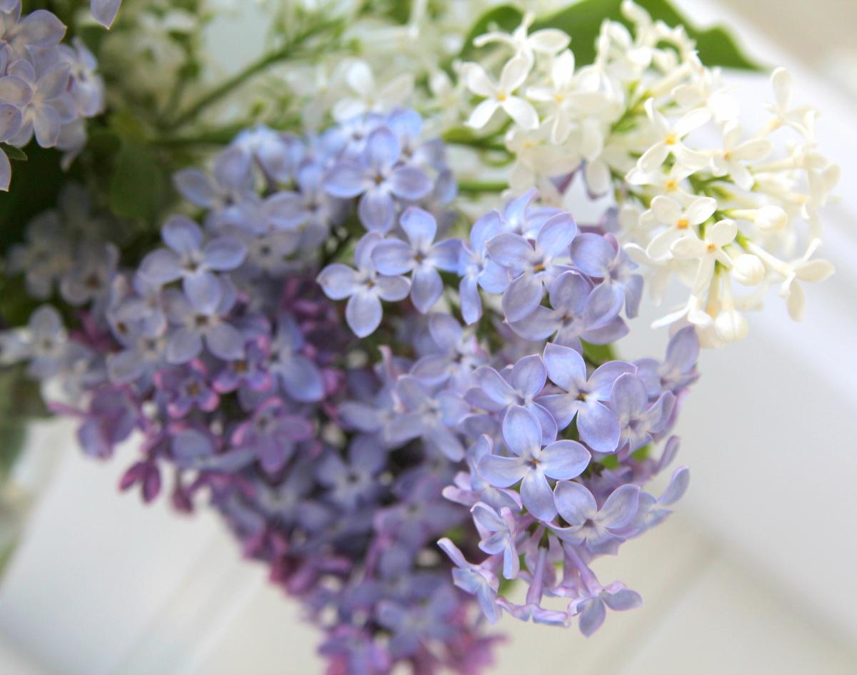 Syreener trädgård blogg